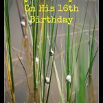 Prayer for My Son On His 16th Birthday