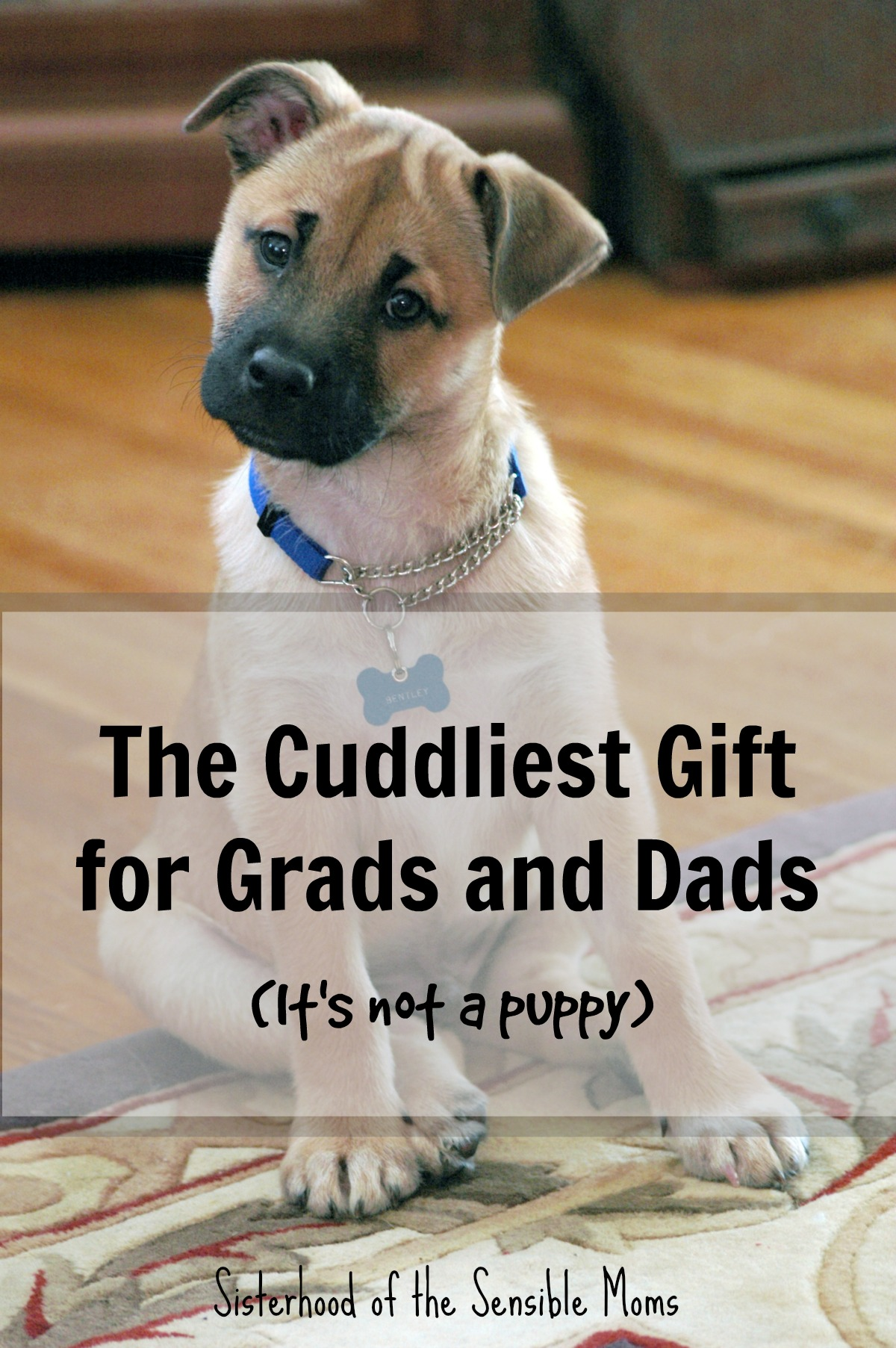 Looking for great Graduation and Father's Day Gifts? How about your memories wrapped up with a side of memorable and cuddly?| Project Repat for Grads and Dads | Sisterhood of the Sensible Moms